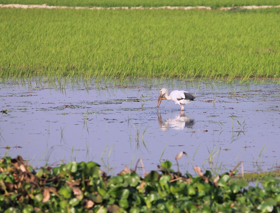 The shot was taken at Purbasthali West Bengal,India