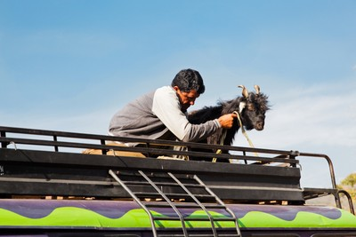 Kashmir Infrastructure man and Goat travel on roof rack