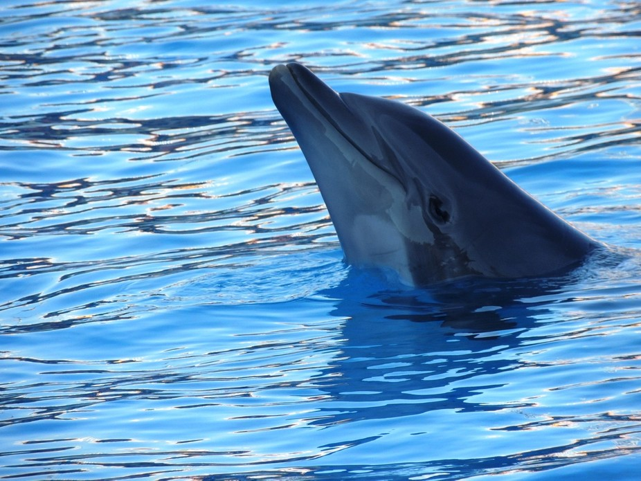 """The happiness of the bee and the dolphin is to exist. For man it is to know that and to wonder..."