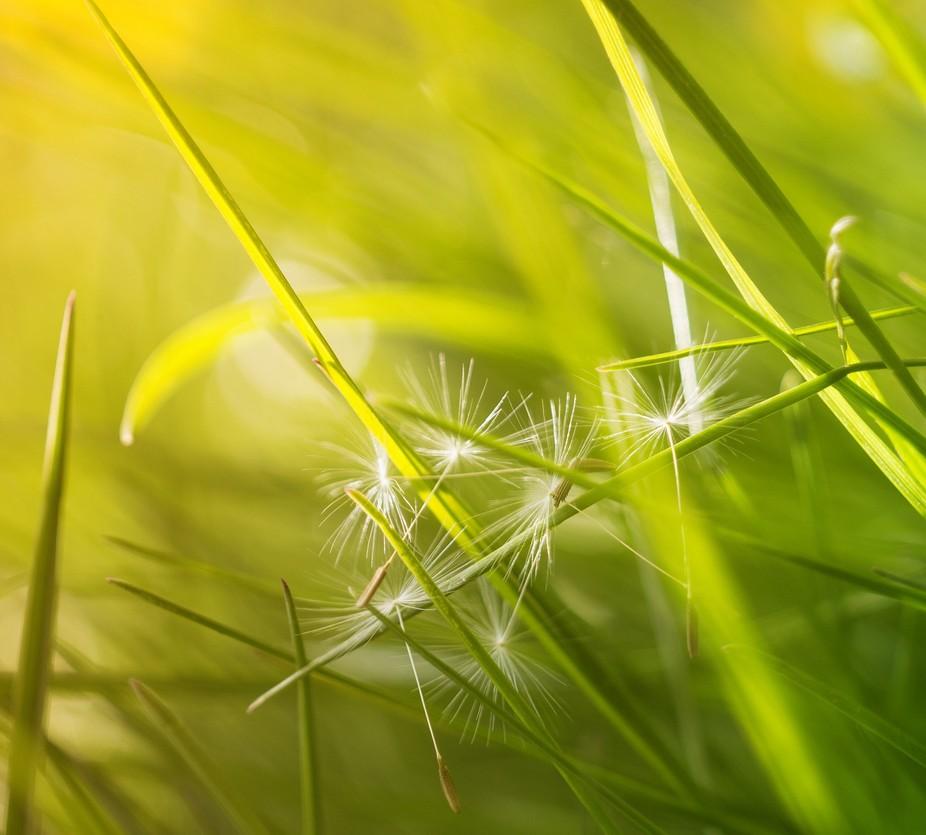 Some summer closeup grass :)