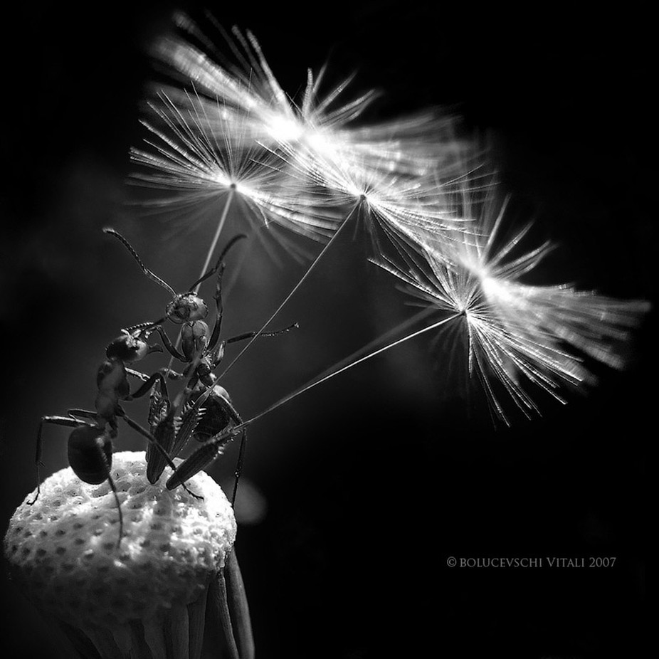 Talks about stars by Bolucevschi - Black And White Compositions Photo Contest