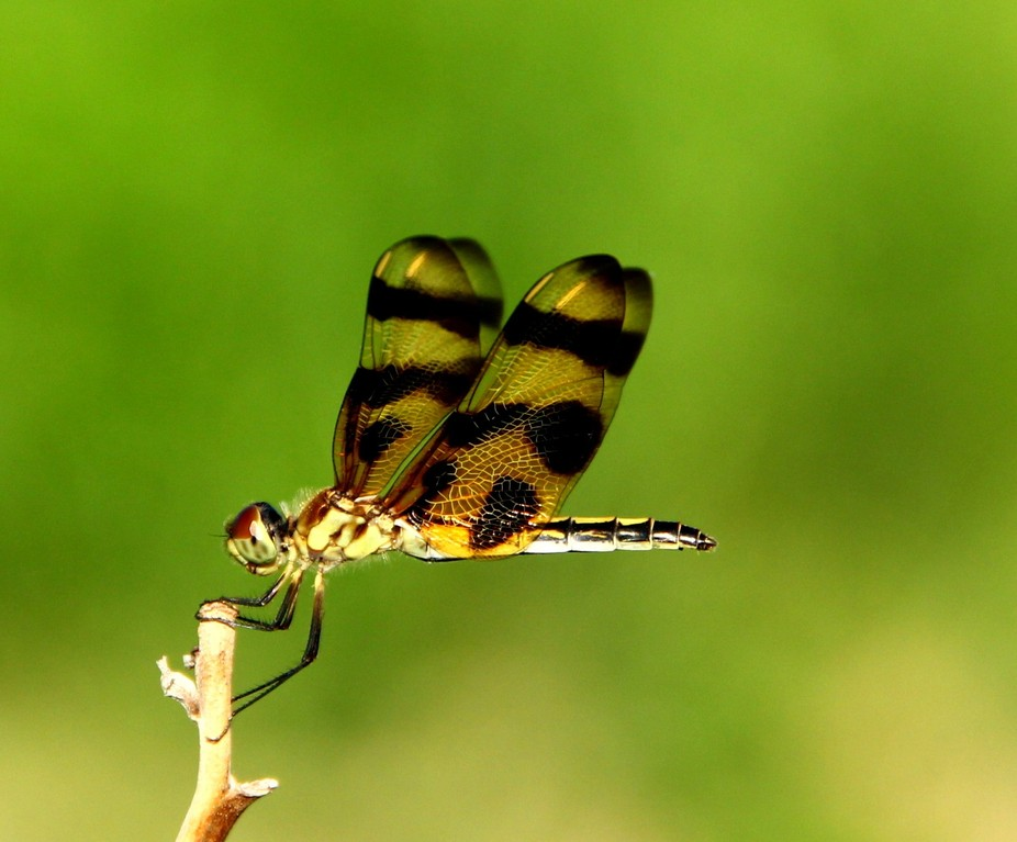 I really enjoyed witnessing this dragonflies precision and how every movement it made was full of...
