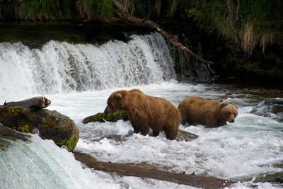 Bears at the falls