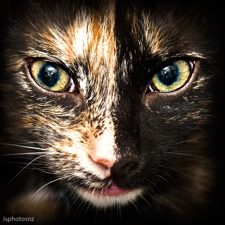 She is Gaffi, our lovely cat. She looks really stunning with her split face, her nose is precisel...