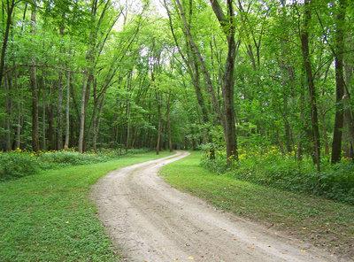 tree lane 2