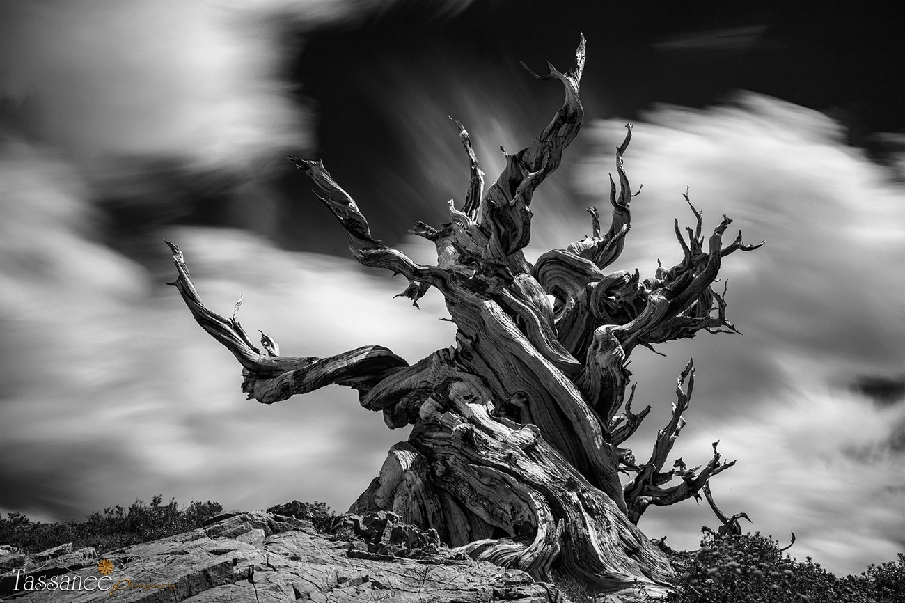 40+ Cool Shots Of Different Textures In Black And White: View The Photo Contest Finalists
