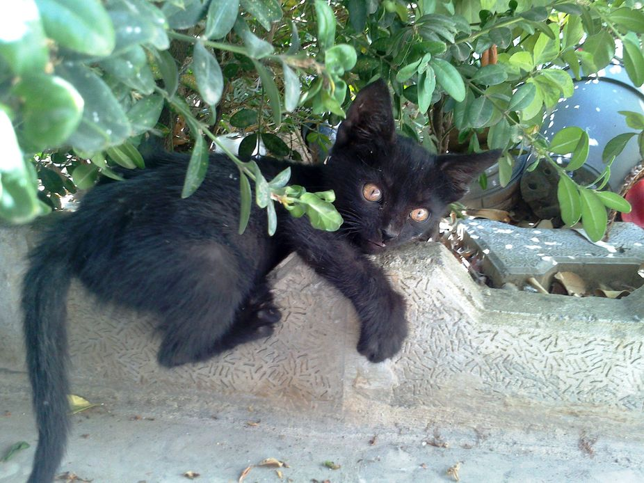 I find him in the street. I peted him, Played with him. But my mom told me to take him away Becau...