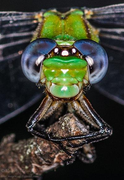 Dragonfly - DSC_7544-2