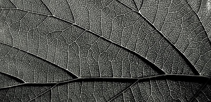 aCV0BSQBEm by terrysinclair - Textures In Black And White Photo Contest