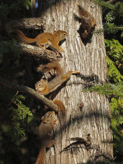 _MG_8628 baby squirrels