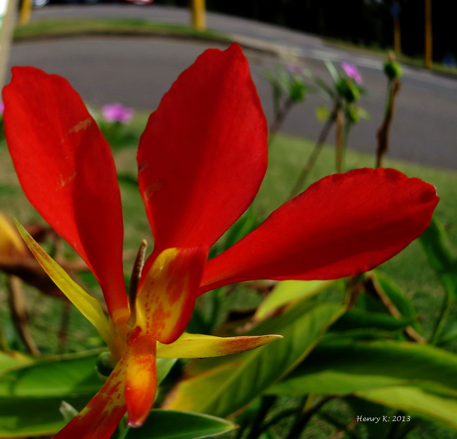 red-petals