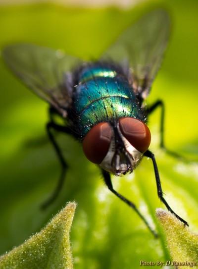 fly-4572