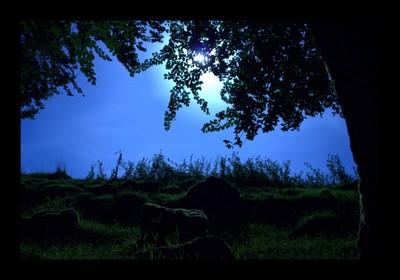 Blue Moon (The Betrayer)