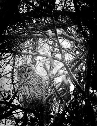 Cam-owl-flage