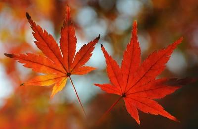Autumn Leaves couple