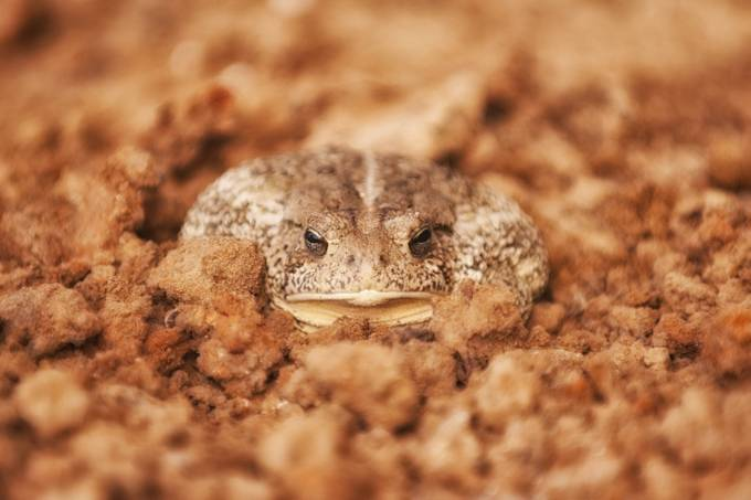 Toad by marcobertazzoni - Can You See Me Photo Contest