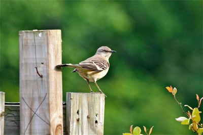 The bird 2
