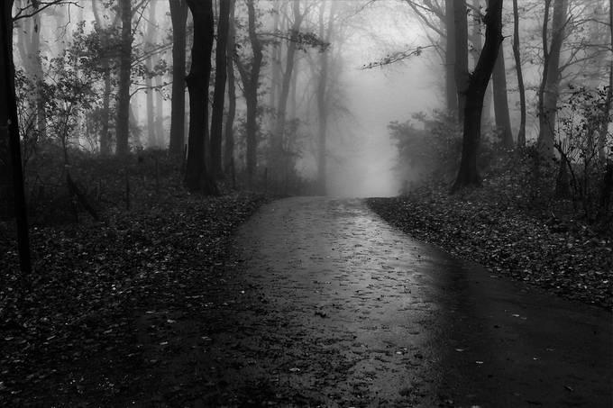 Mist by IngridD - Dark Forest Photo Contest