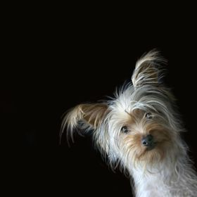 Took this of my neighbors Pup in front of a black cloth using window light