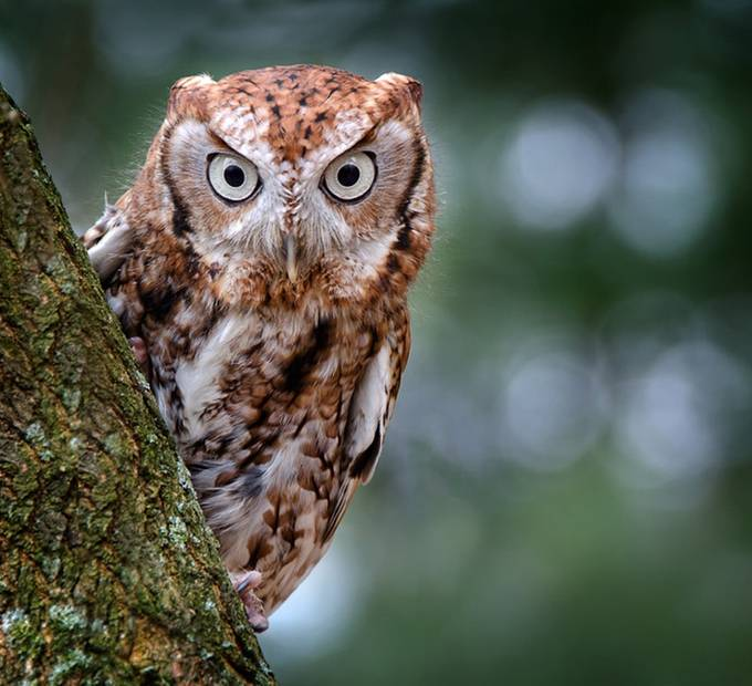 I see you by beamieyoung - Only Owls Photo Contest