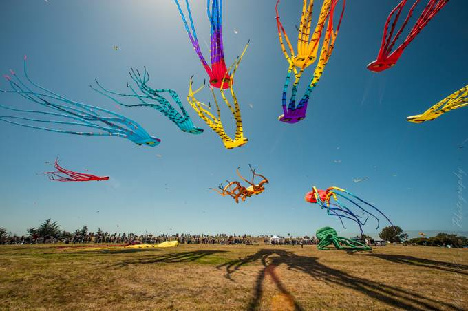 Berkeley Kite Festival by michaelkovler - Creative Reality Photo Contest