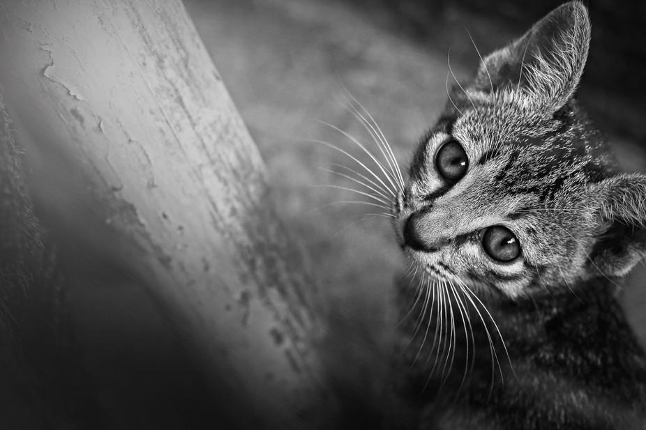 Shine Of cat