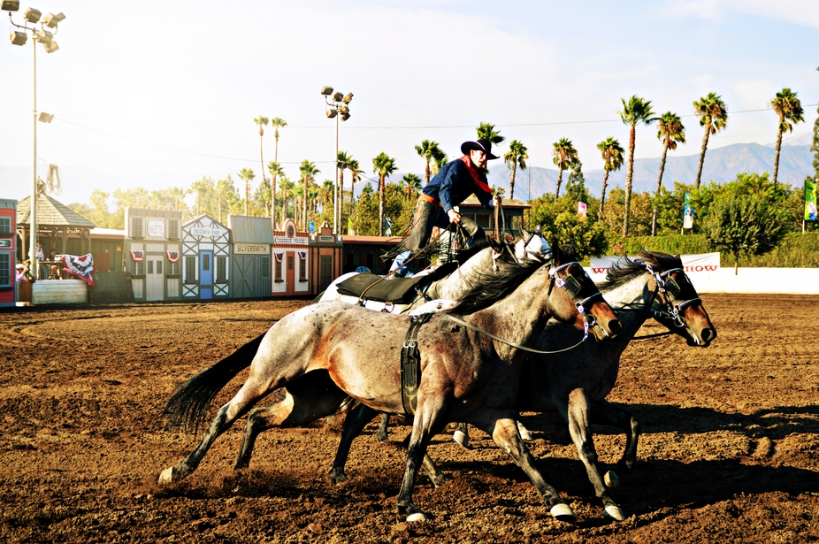 Wild West show where the man stand in two horses and controlling this 4 horses. This is one of my...