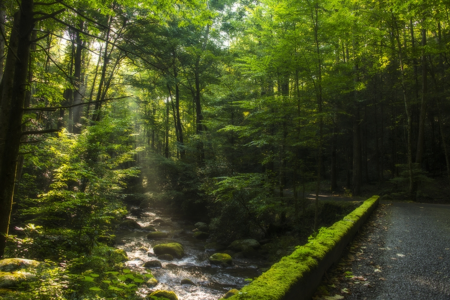 Sun rays peaking through the trees on Roaring Forks Trail