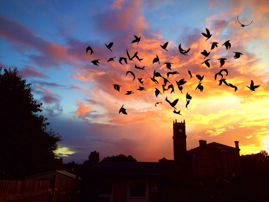 Silhouetted Hanwell Community centre featuring a flock (cloud of blackbirds).