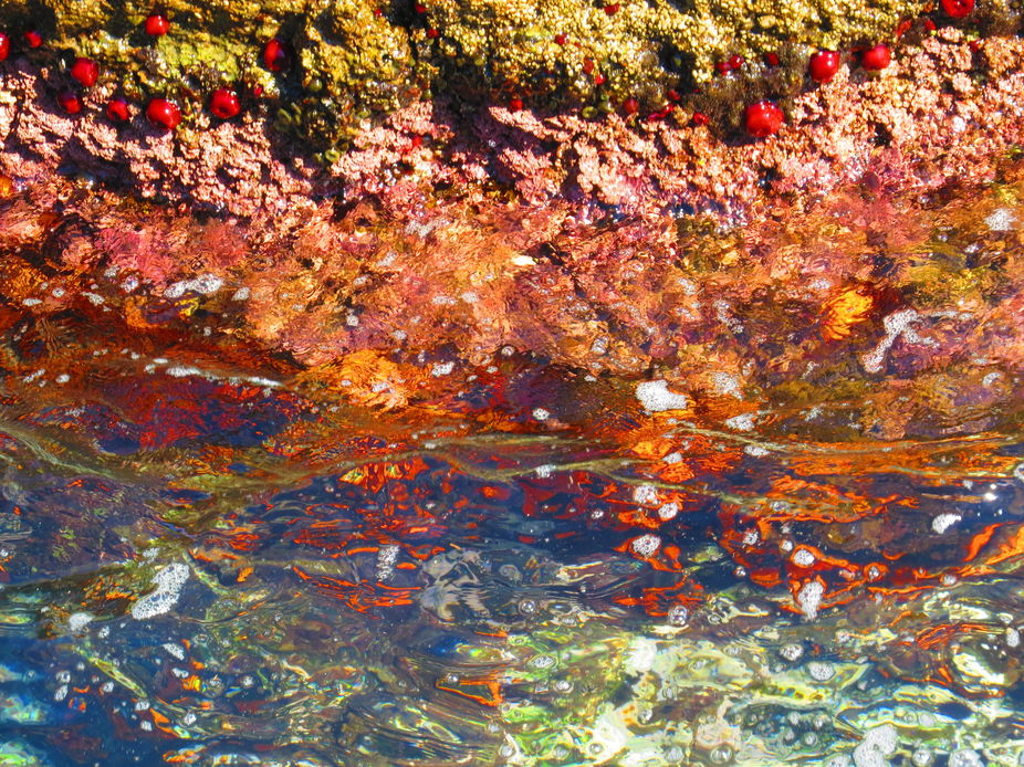 On the rocks - Marina del Este