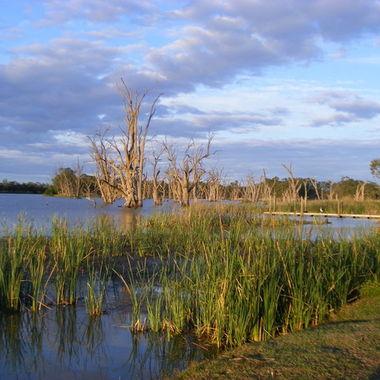 Murray River Wetlands