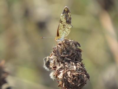 Little Butterfly in the Meadow