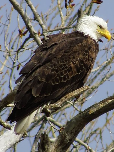 Tilted Eagle Shot