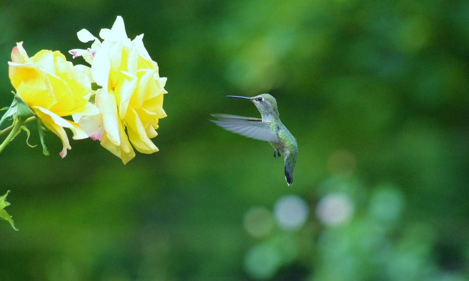 Hummer in Air (1)