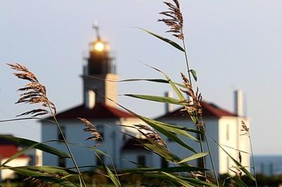 The Light Beyond the Grass