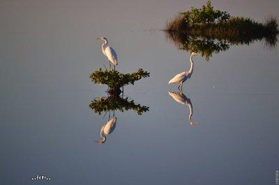 many reflections