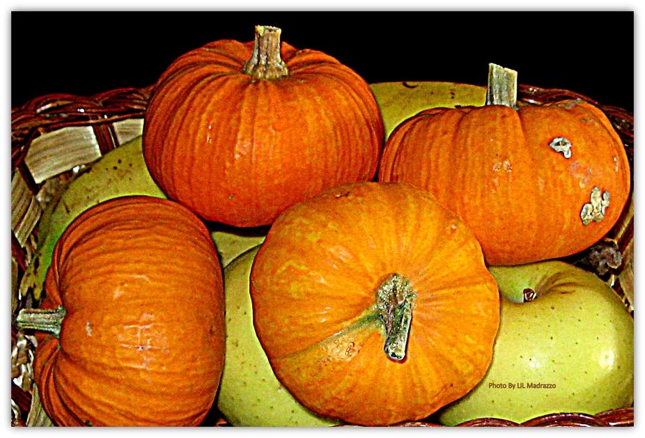 Pumkins Pumpkins everywhere
