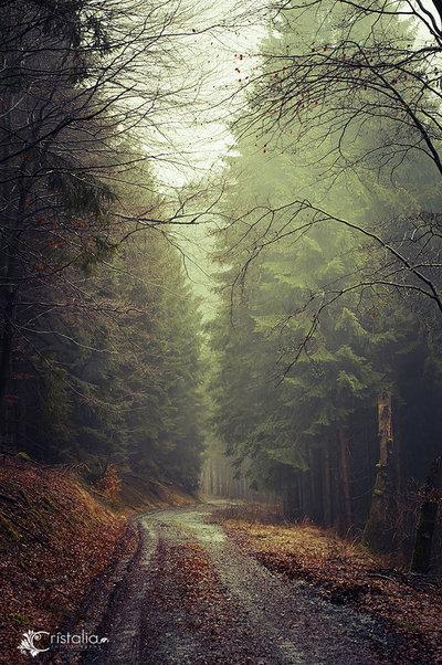 Misty Road II