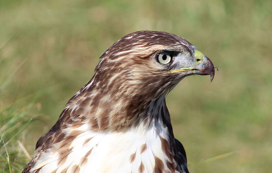This hawk was hunting when this shot was taken