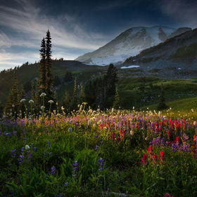 Sunset at Mt. Rainier Washington. We were fortunate to have nice clouds on this particular day. The flowers in the foreground were reaching for t...