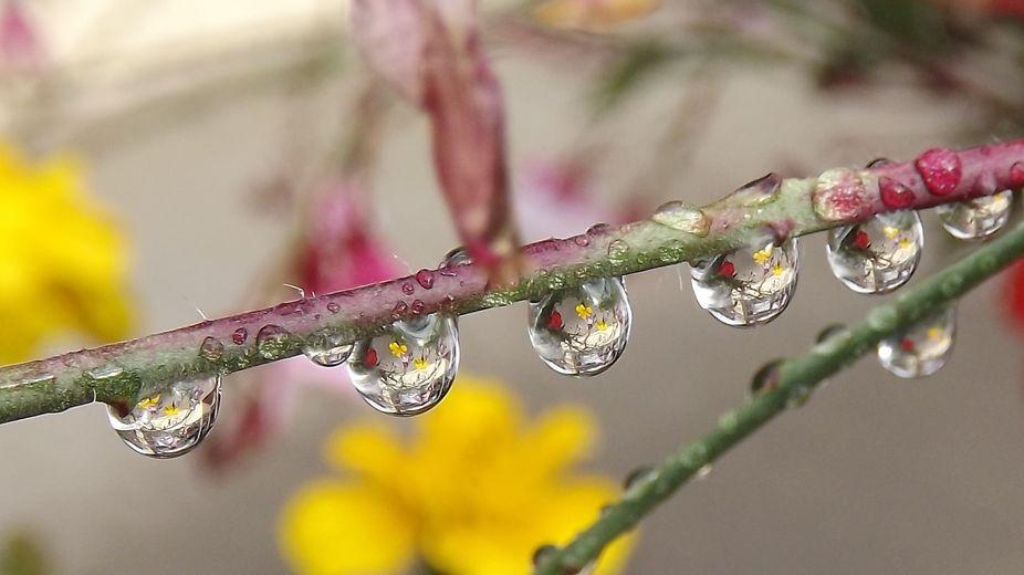 Raindrop.
