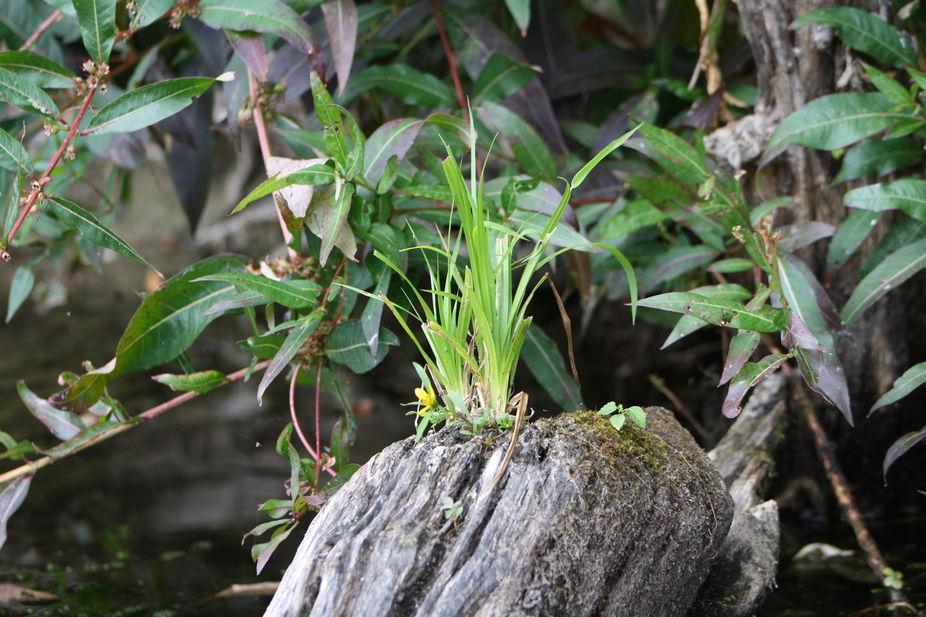 Flora on log