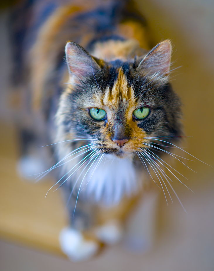 12-year -old Rosie at the Shelter by marthamccuskerpope - Green Eyes Photo Contest