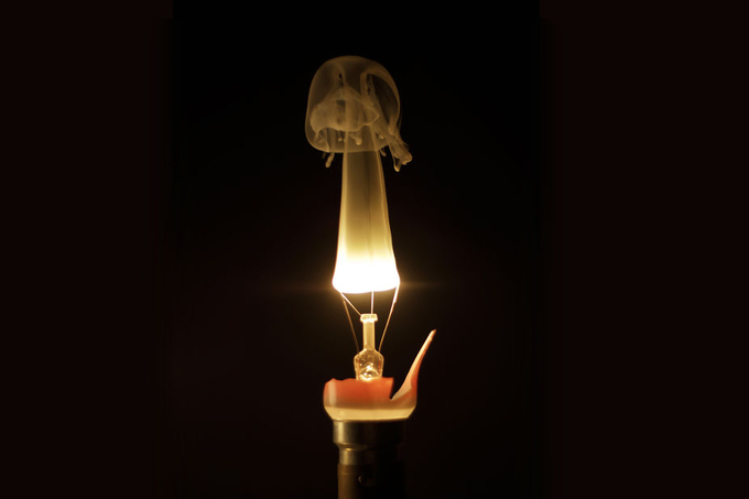 Lightbulb by olivierlw - Experimental Light Photo Contest