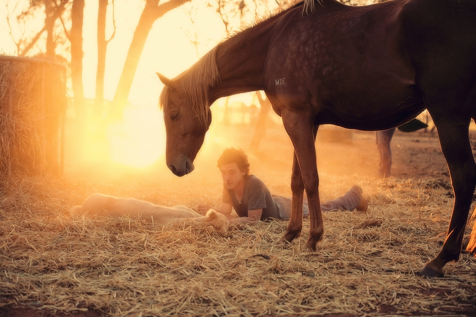 The bond between rider and horse begins as soon as they are born.
