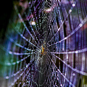 Sunlight refracted through dew on a spiders web to create a rainbow of colours.