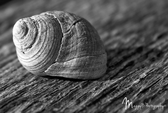 Moved on by MeganMariePhoto - Textures In Black And White Photo Contest