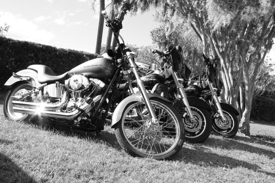 Harley Davidson\'s sit in the sunlight at Boone hall Plantation, Mt Pleasant SC.