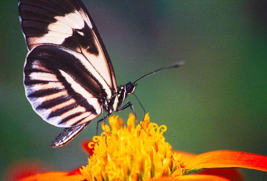 A butterfly on a flower!  Duh!