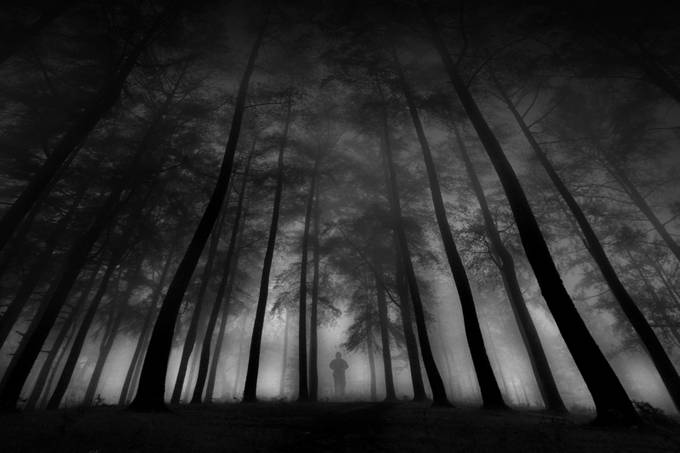 Alone in the Jungle by alamsyah_rauf_2216 - A World In Black And White Photo Contest